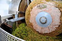 Produzione frantoio Miccoli
