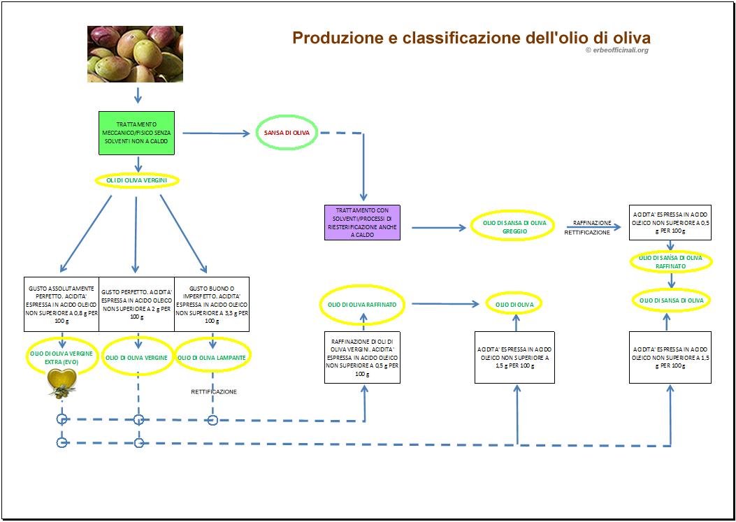 Produzione e tipi di Olio di oliva